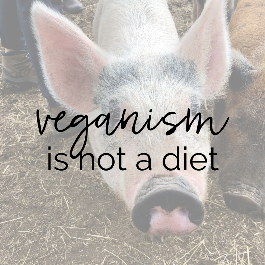 "Two rescue piglets at a farm animal sanctuary with text overlay ""veganism is not a diet"""