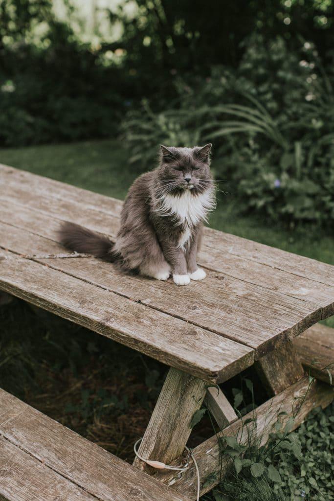 Luna the farm cat at Mt. Hood Organic Farms