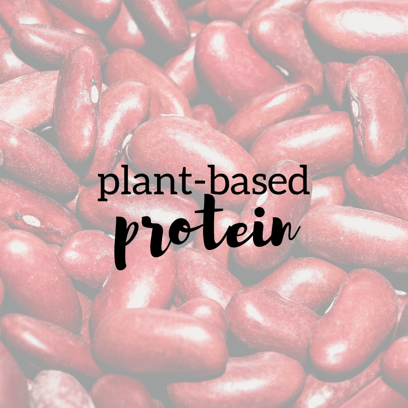 Plant-Based Protein 101 | Taylor Wolfram, MS, RDN, LDN