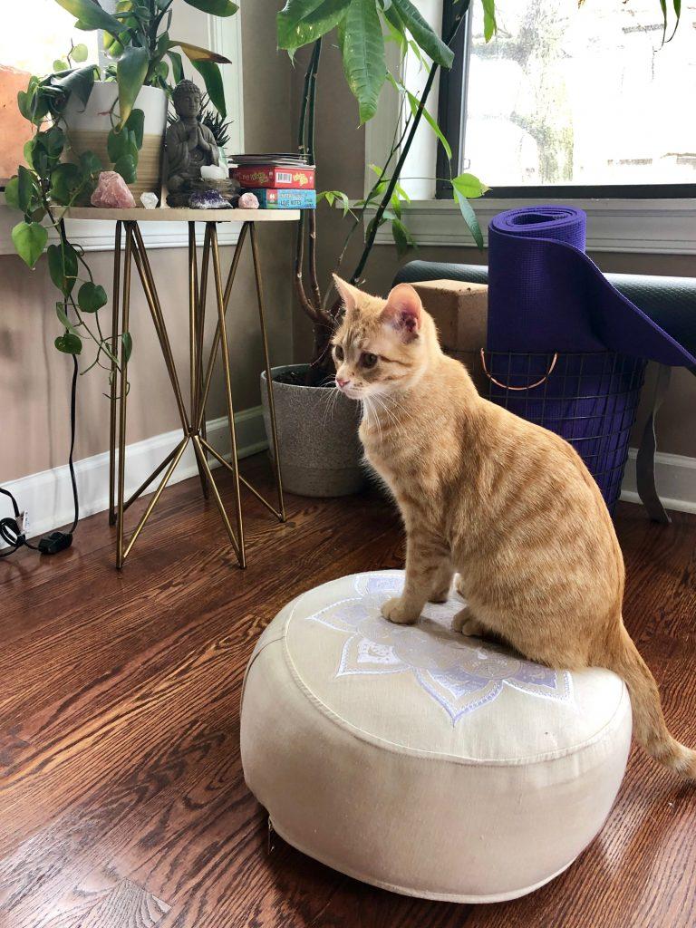 Kitty Meditation