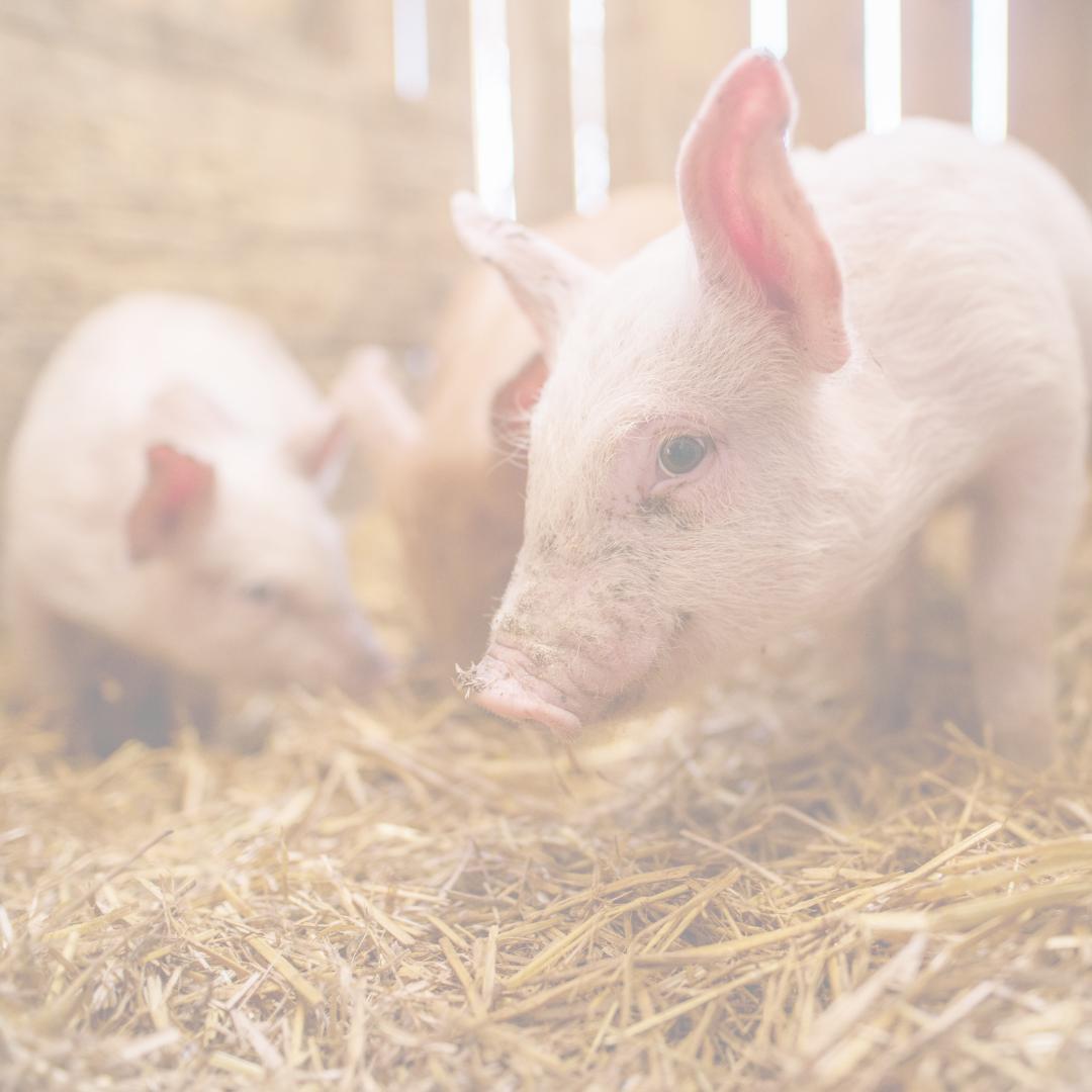 Ethical Veganism | Taylor Wolfram